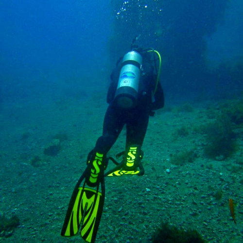 2 Tank Guided Day Dive