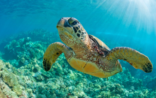 Where to Find Green Sea Turtles in San Diego
