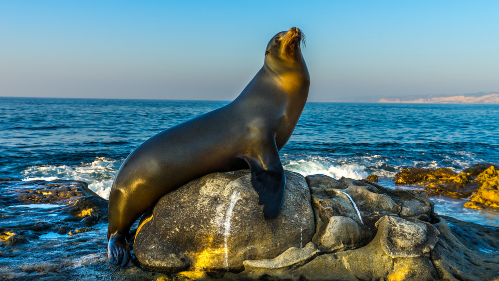 Top 10 Animals to Look for in La Jolla